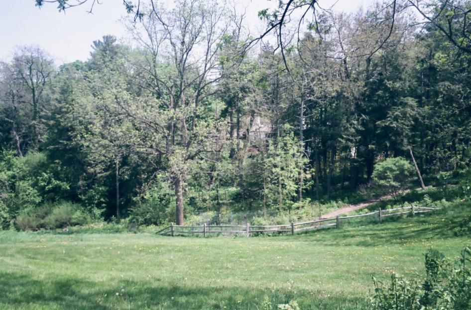Nichols Arboretum. Ann Arbor, Michigan. Jana Shemano, 2018.