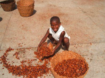 A cocoa worker processes cocoa beans.