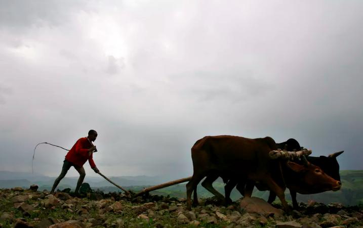 An Ethiopian farmer in the Amhara highlands outside the historic village of Lalibela. EPA/Stephen Morrison