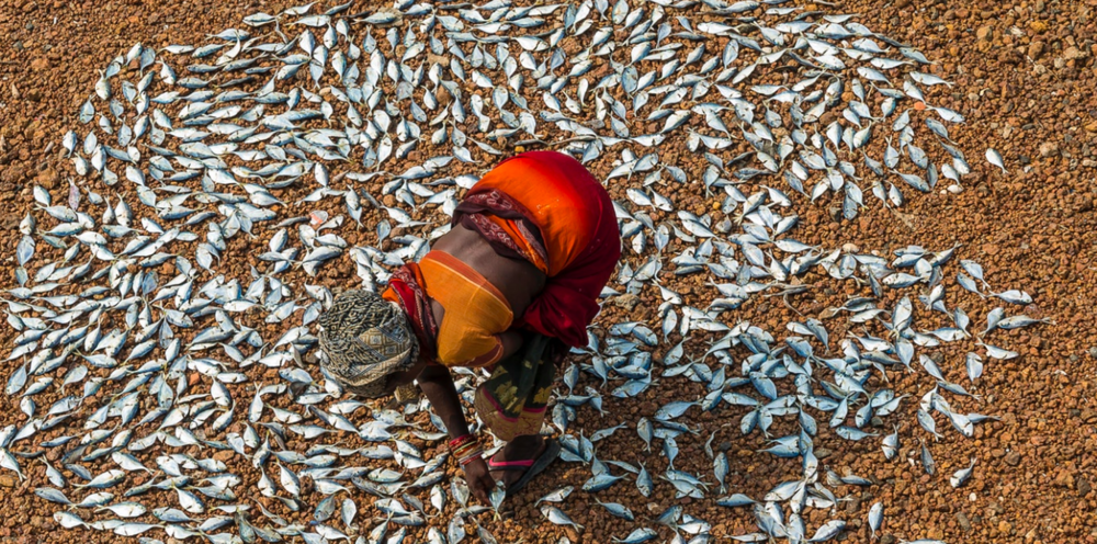 On a three-week long expedition from the southernmost tip of India to Chennai, I stopped in every coastal town to see what the fishermen were bringing in. The women I met told me that the fish are getting smaller and smaller, and many species are disappearing.    India