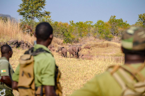 A group of rangers on patrol in Zimbabwe. Bumihillsfoundation.CC BY-SA 4.0