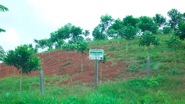 Reforestation project in northern Costa Rica: a plantation of native trees with valuable wood.Matthew Fagan, CC BY-ND