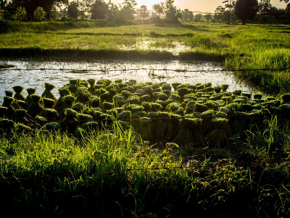 SunriseSeedlings