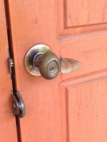 This week - exhibit door and butterfly.
