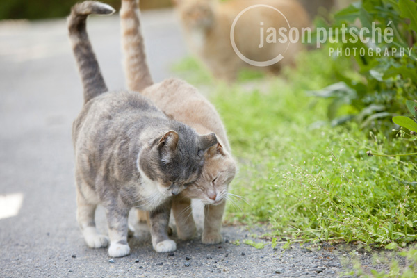 Head-Bump-Cats.jpg
