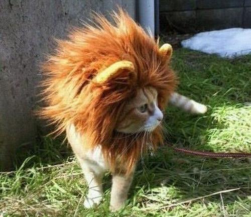 lions-mane-cat-hat-3.jpg