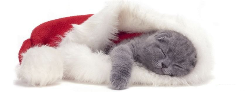 Santa Paws, no sleeping on the job!