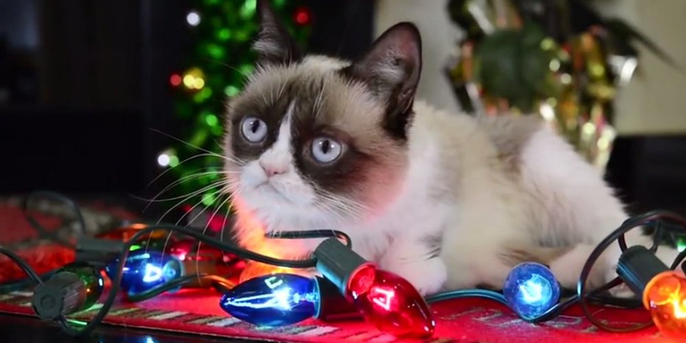 Even Grumpy Cat loves the holidays