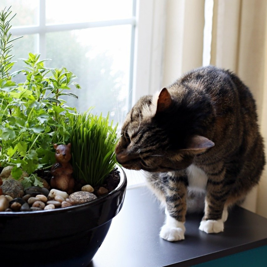 make-your-own-diy-indoor-cat-garden-sq.jpg