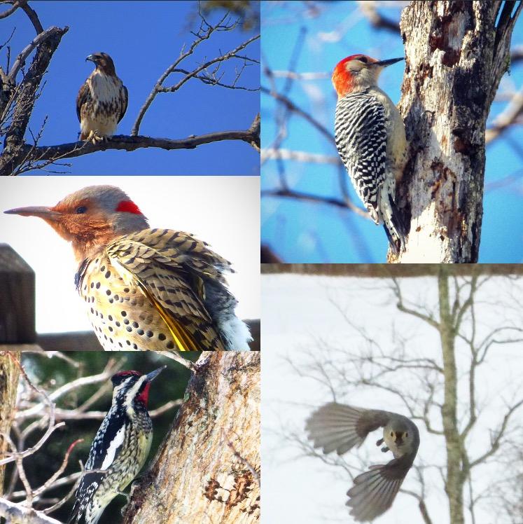 ... Becoming a crazy bird watcher