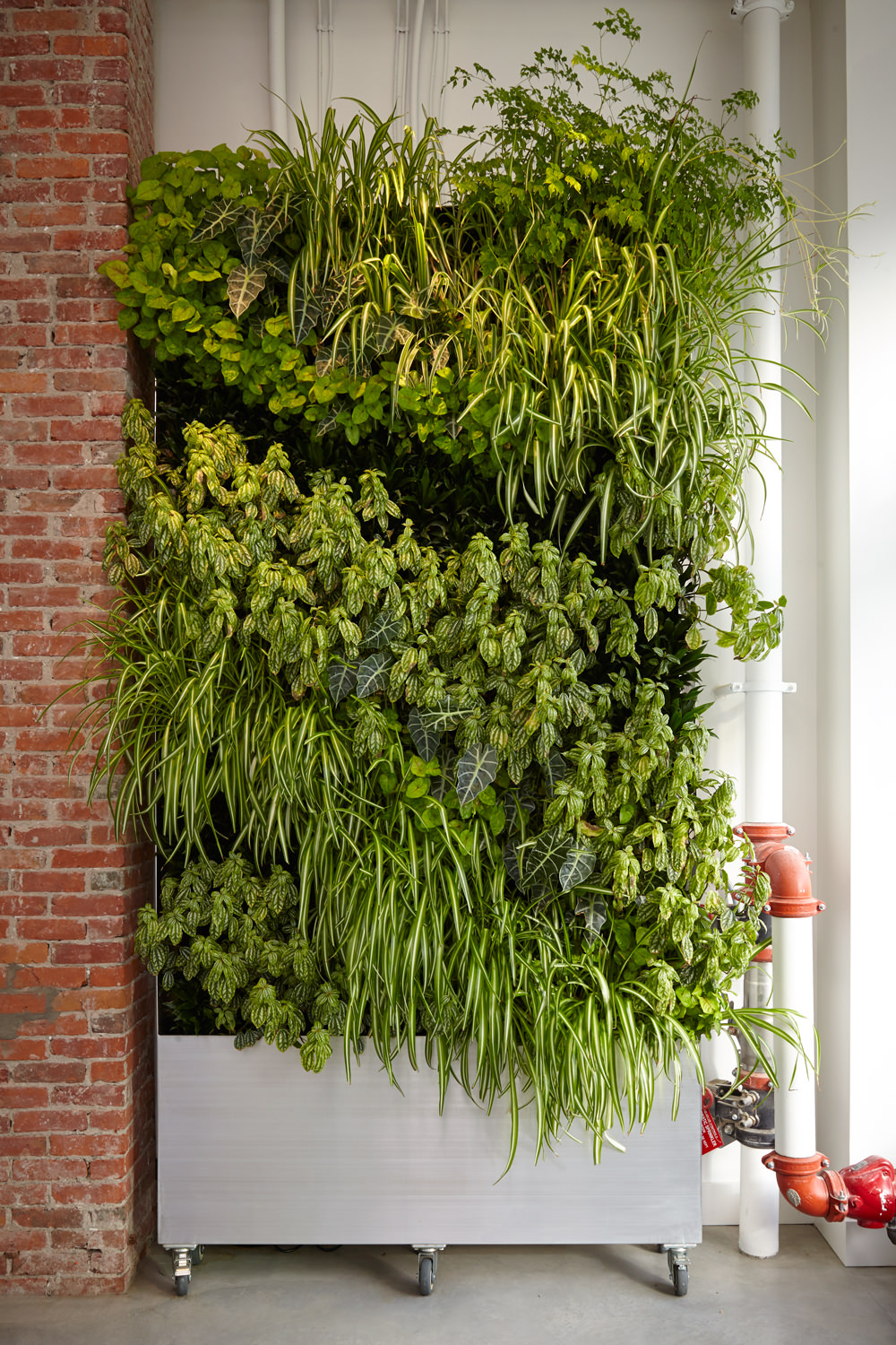 float-house-victoria-centre-location-floatation-therapy-centre-living-plant-wall