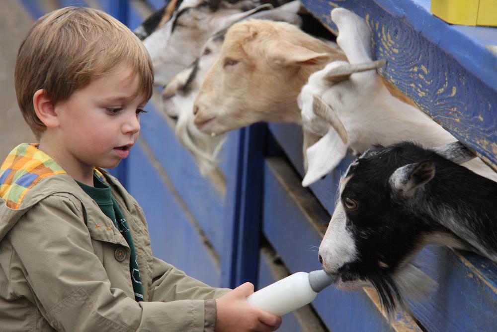 goats_fullsize.jpg