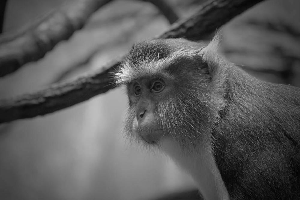 monkey_fullsize.jpg