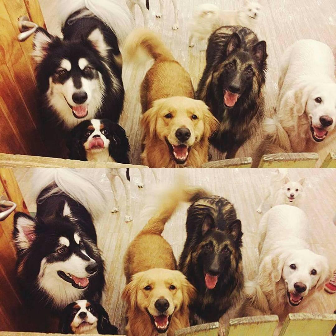 """<a href=""""http://instagram.com/dogcafe_bauhouse"""">@dogcafe_bauhouse</a>"""