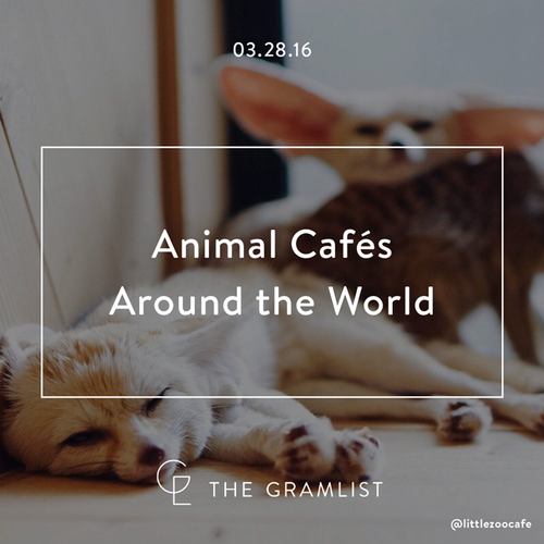 AnimalCafes_Cover_Web.png