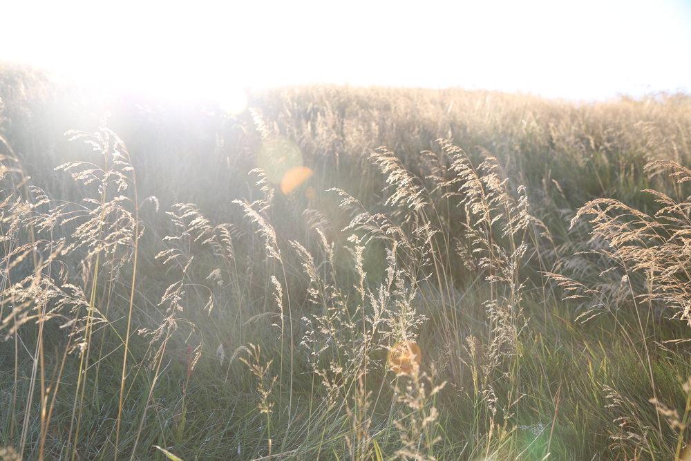 fields near Salthús House - Skagaströnd, Iceland