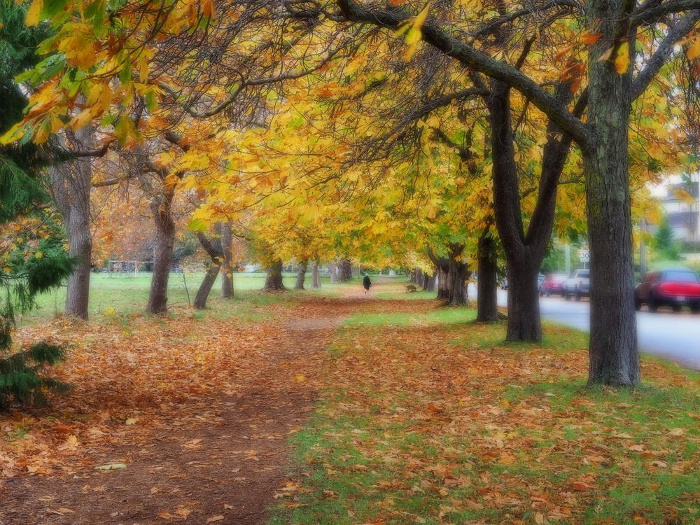 park2x.jpg
