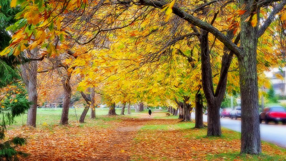 autumn in park resized.jpg