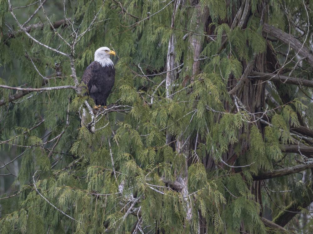 Eagle Lookout.jpg