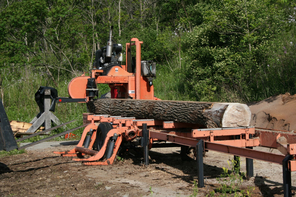 Walnut log on the sawmill