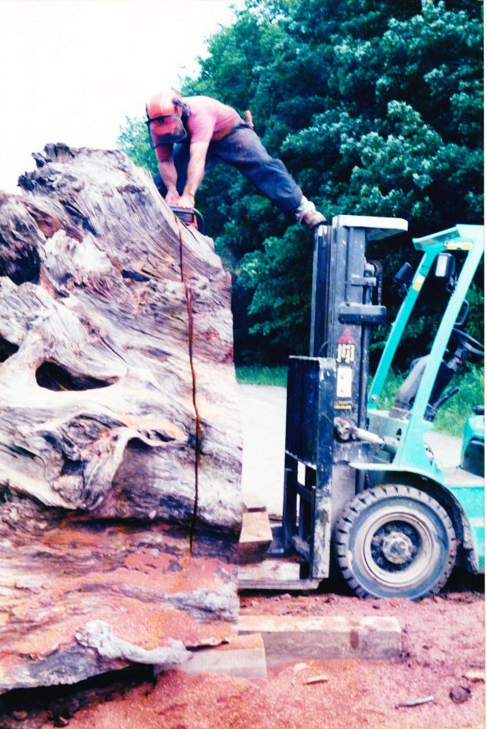 Sawing crosscut from redwood stump in Wassaic NY