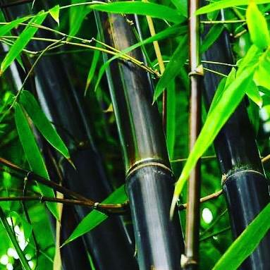 black bambu.jpg