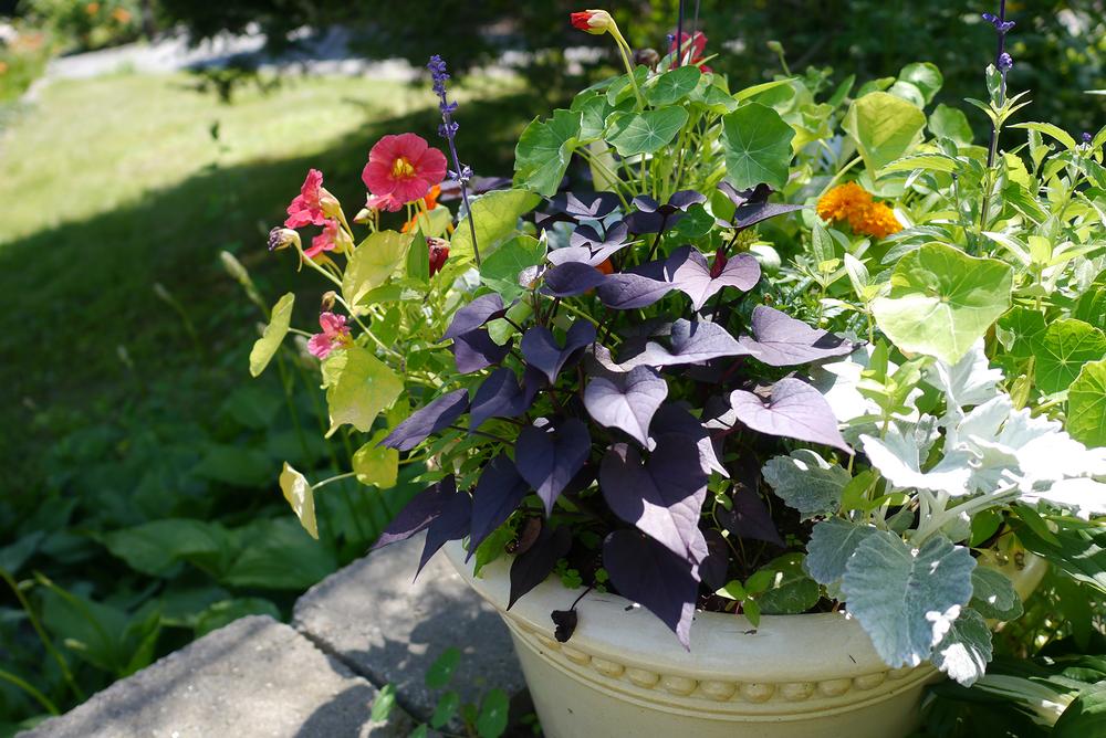 126C Planter Pot.jpg