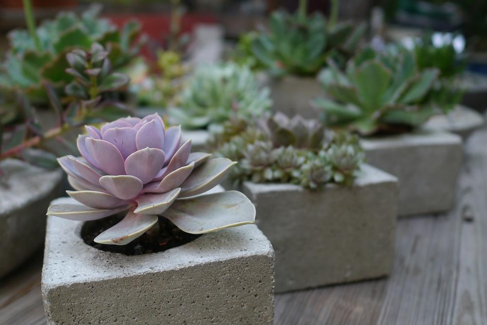 Planters Table 1.jpg