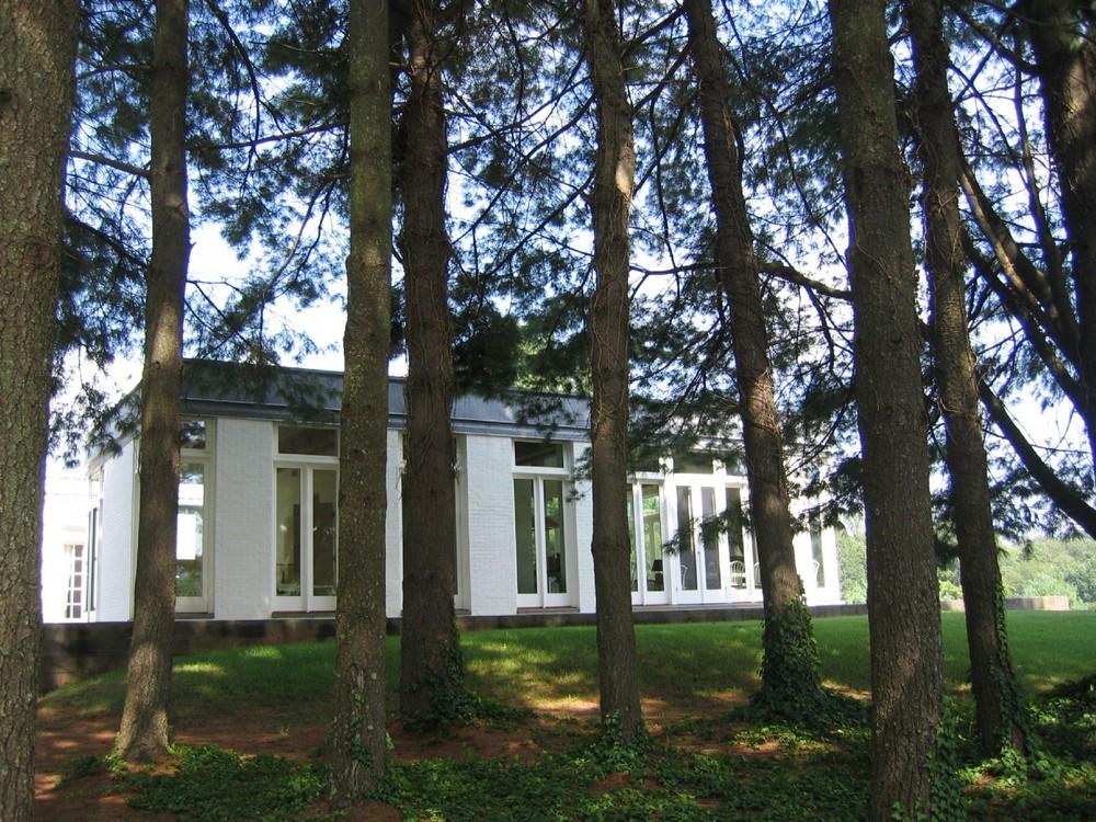 large_charlottesville_trees.JPG
