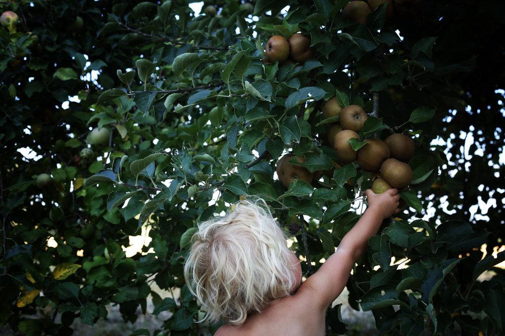 appeltaart 5.jpg