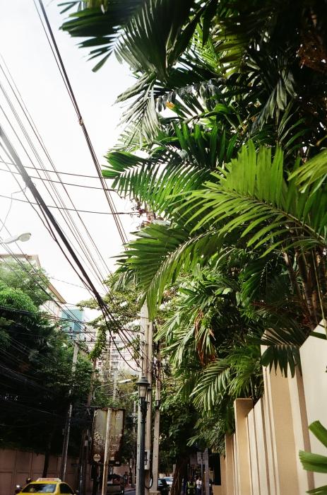 BANGKOK-PLANTS-BY-MARLEN-MUELLER-02.jpg