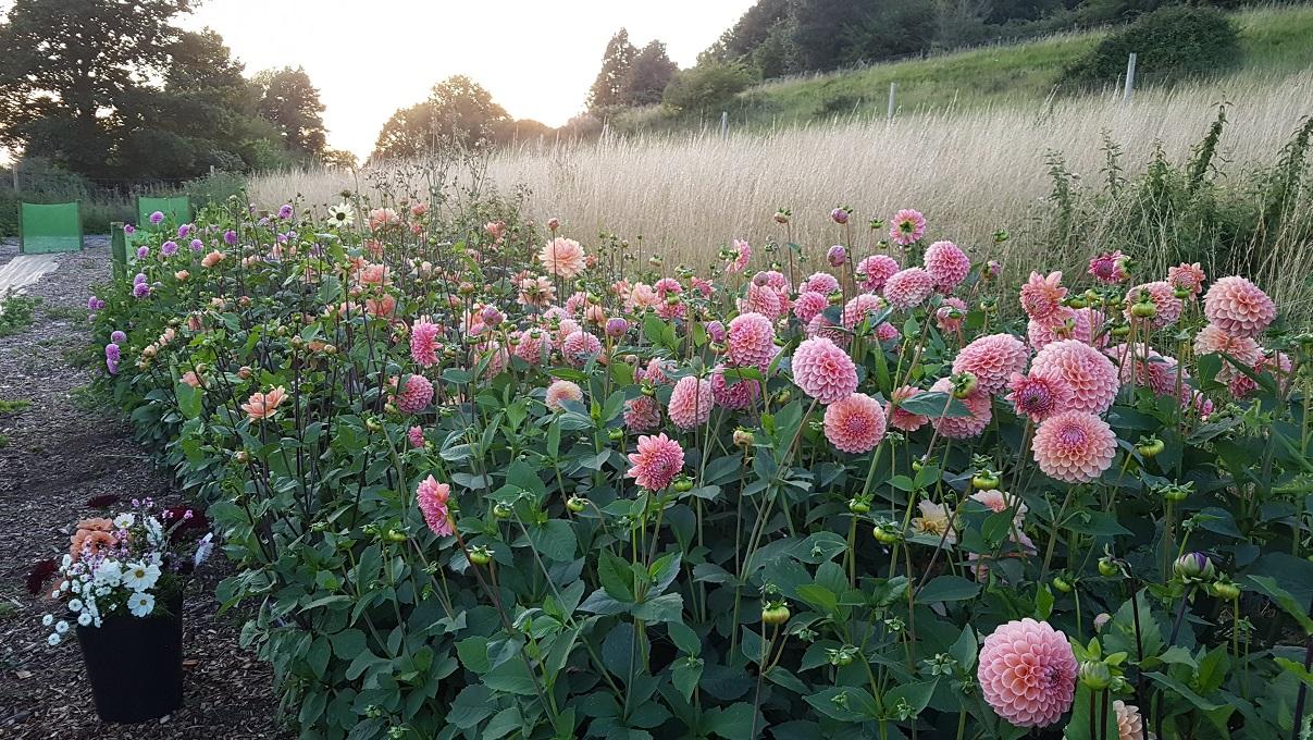 Bristol Flower Farm And Florist Pipley Flowers Flower Farm And