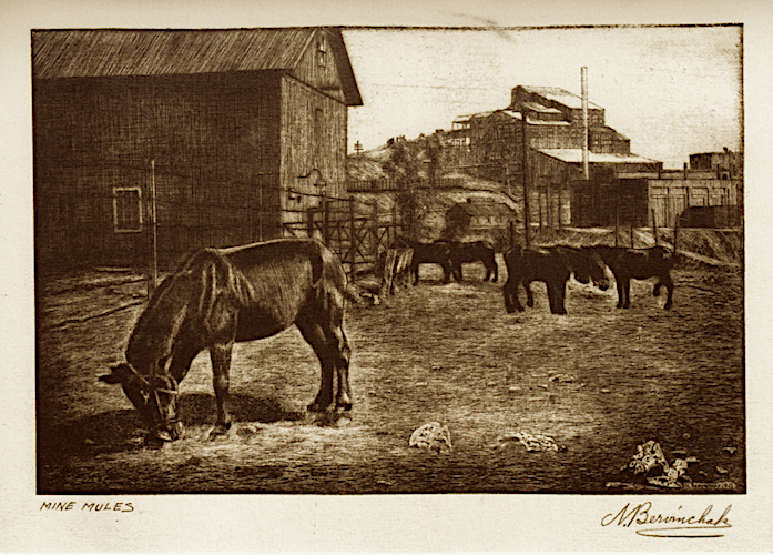Mine Mules notecard          front view -