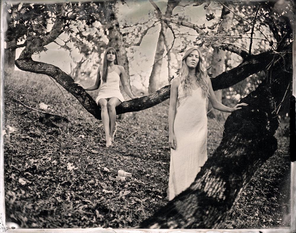 Oak Foothills, wet collodion, Sean Peeler.jpg