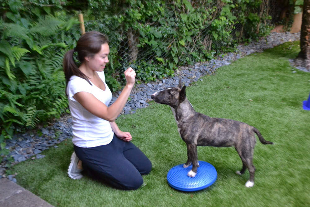 dog physiotherapy birmingham midlands