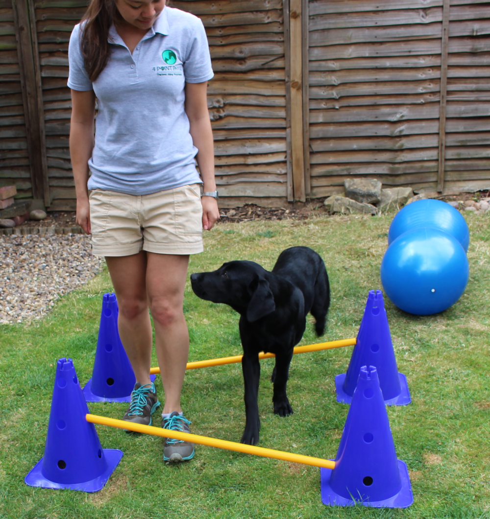 Dog Physiotherapy - exercise rehabilitation using poles to increase limb range of movement and improve coordination