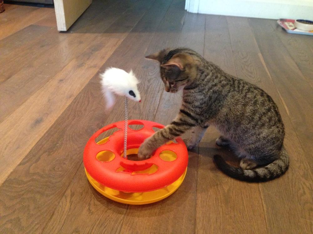 bruno cat play 4.jpg