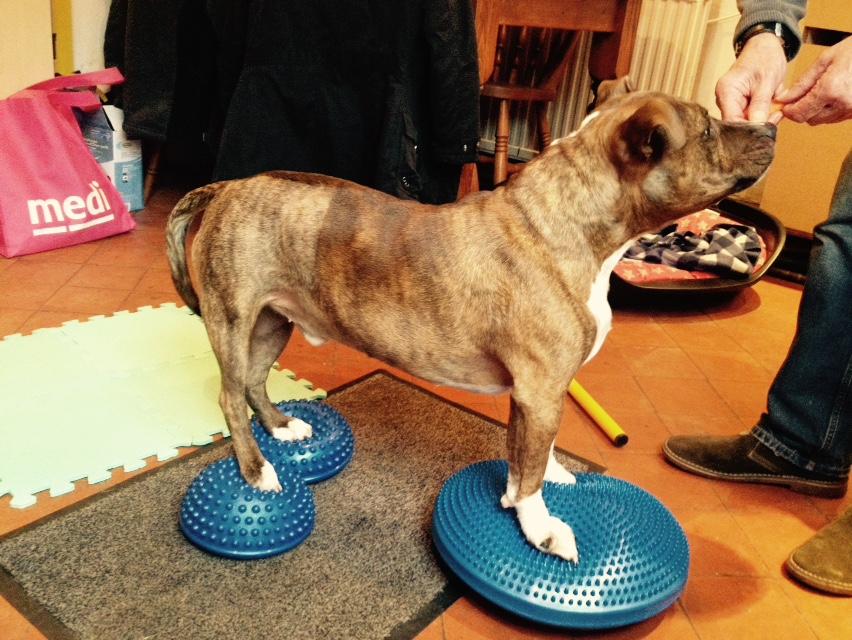 dog physio 4.jpg
