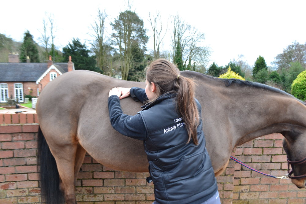 Horse Physiotherapy - massage can help to reduce pain, tension and scar tissue