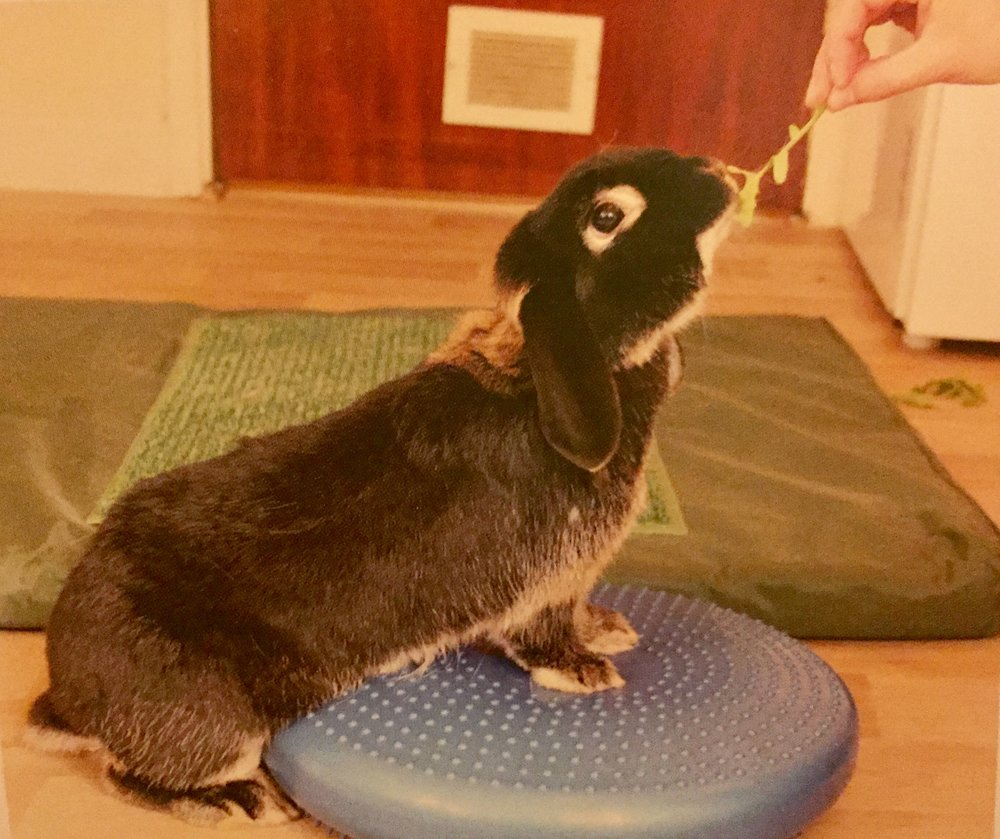 RabbitPhysio.jpg