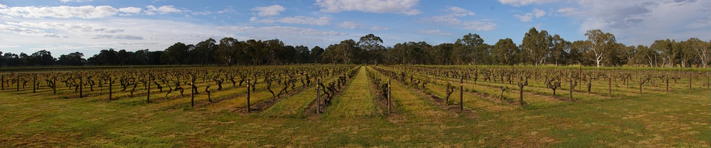 Bests vineyard, Victoria