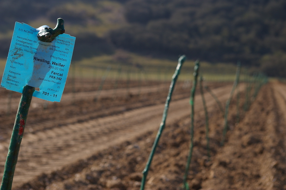 Rathfinny Estate being planted with Riesling, March 2012