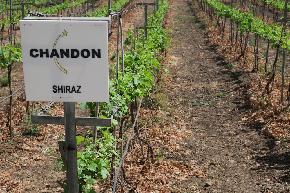 Chandon Shiraz sign.JPG