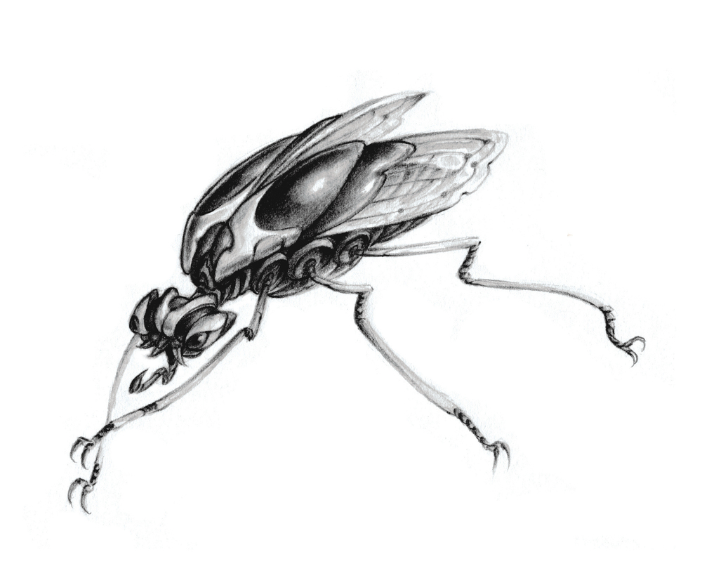 """Untitled (mech-insect).  2004 - pencil & watercolor on paper. 5"""" x 8""""."""