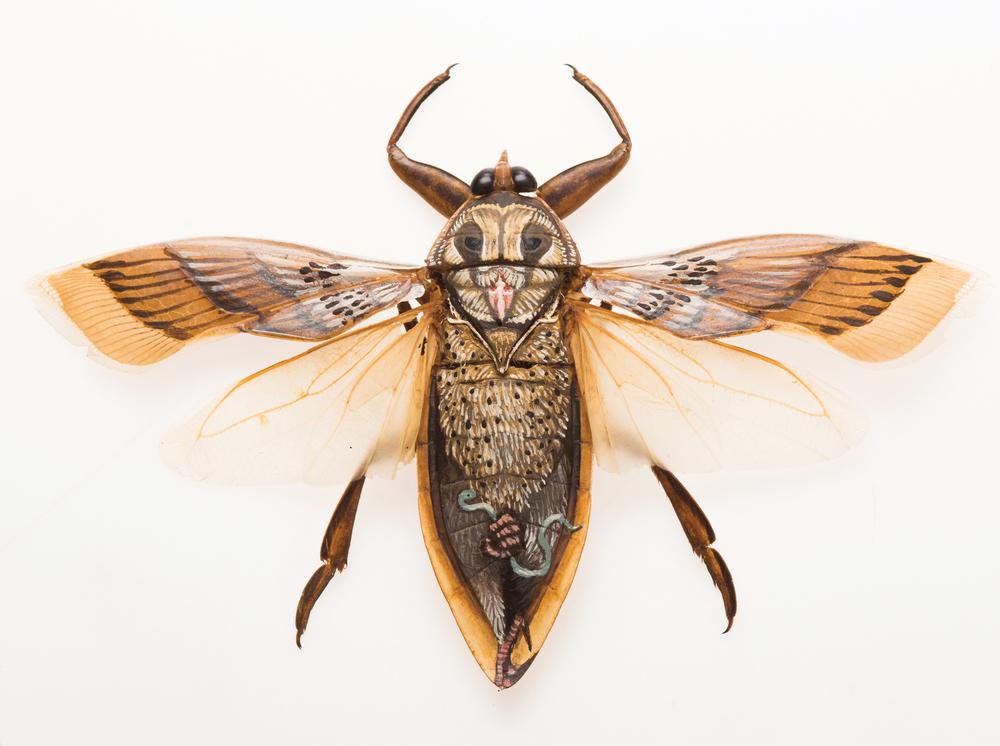 """Fukuro.  2013 - acrylic on beetle. 2"""" x 4.5""""."""