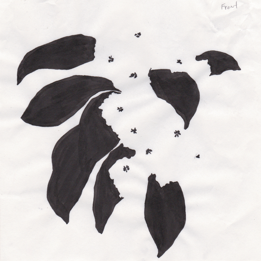 MountainLaurel_Scan_Stencil_03.jpg