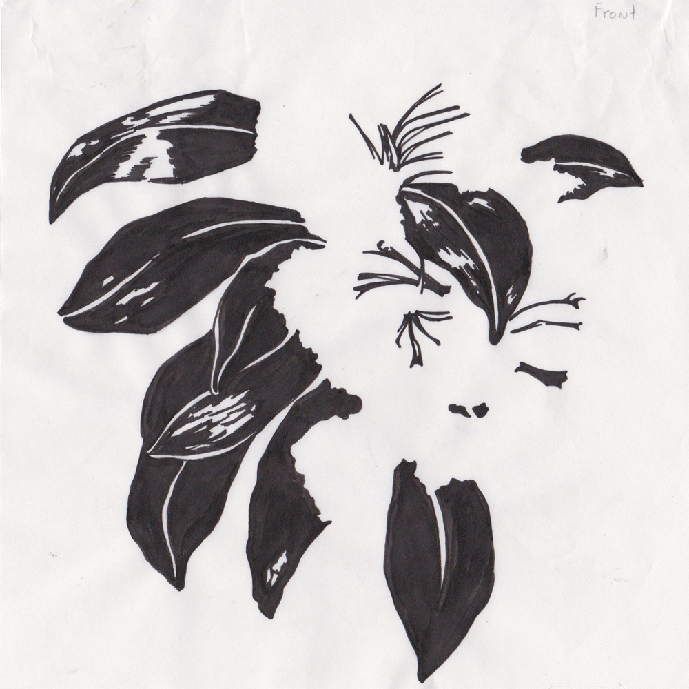 MountainLaurel_Scan_Stencil_04.jpg