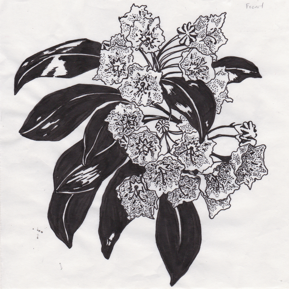 MountainLaurel_Scan_Stencil_05.jpg