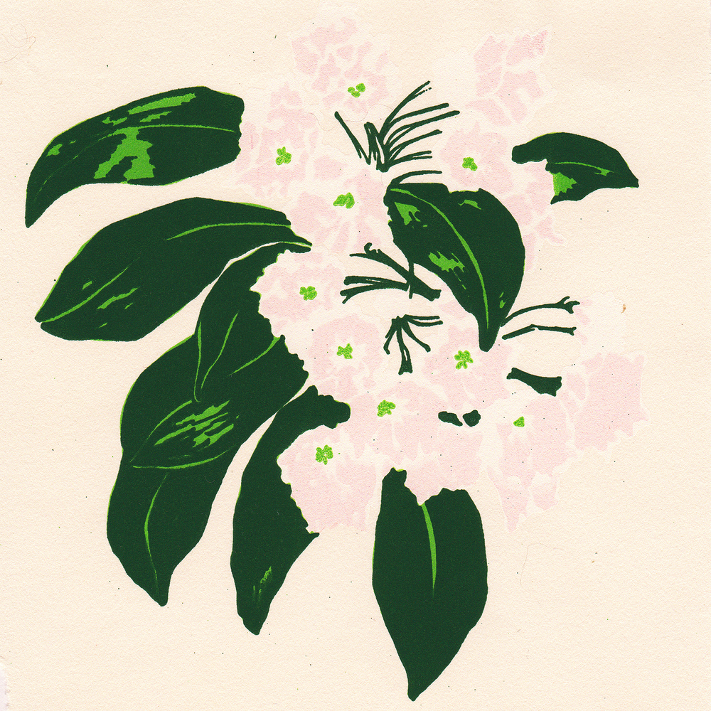 MountainLaurel_Scan_Layer_04.jpg