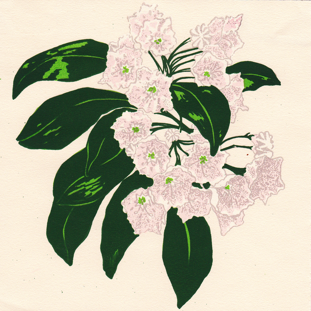 MountainLaurel_Scan_Layer_05.jpg